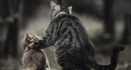 eläimet_kissat_harmaa